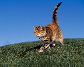 CAT 02 RK1067 02