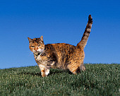 CAT 02 RK1067 03