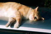 CAT 02 RK1068 05