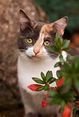 CAT 02 RK1084 01