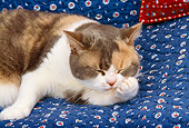 CAT 02 RK1117 01