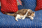 CAT 02 RK1117 03