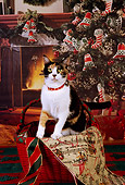 CAT 02 RK1130 07