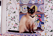 CAT 02 RK1135 02