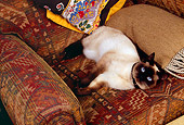 CAT 02 RK1155 02