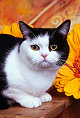 CAT 02 RK1446 01