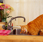 CAT 02 RS0019 03
