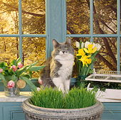 CAT 02 RS0051 02