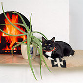 CAT 02 RS0065 01