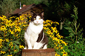CAT 02 RS0186 01