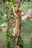 CAT 03 AB0002 01