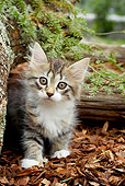 CAT 03 AB0005 01