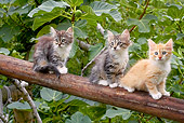 CAT 03 AB0006 01