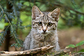 CAT 03 AC0012 01