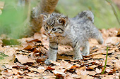 CAT 03 AC0014 01