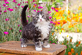 CAT 03 BK0001 01