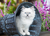 CAT 03 BK0004 01