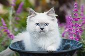 CAT 03 BK0005 01