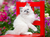 CAT 03 BK0007 01