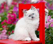 CAT 03 BK0008 01
