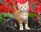 CAT 03 BK0009 01