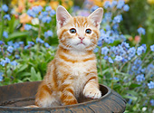 CAT 03 BK0012 01