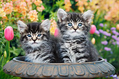 CAT 03 BK0018 01