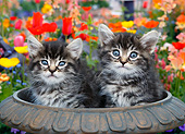 CAT 03 BK0019 01