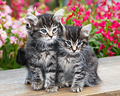 CAT 03 BK0020 01