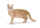 CAT 03 CH0003 01