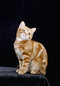 CAT 03 CH0004 01