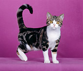 CAT 03 CH0005 01