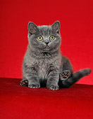 CAT 03 CH0007 01