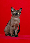 CAT 03 CH0008 01