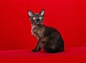 CAT 03 CH0009 01