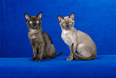 CAT 03 CH0010 01