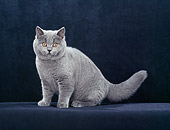 CAT 03 CH0013 01