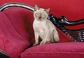 CAT 03 CH0014 01