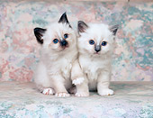 CAT 03 CH0018 01