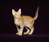 CAT 03 CH0020 01