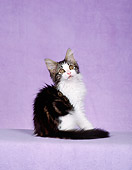 CAT 03 CH0021 01