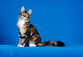 CAT 03 CH0022 01