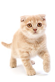 CAT 03 GL0003 01