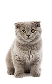 CAT 03 GL0006 01
