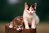CAT 03 GR0023 01