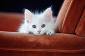 CAT 03 GR0045 02