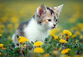 CAT 03 GR0085 01