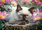 CAT 03 GR0106 01