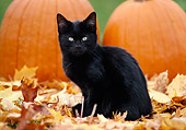 CAT 03 GR0126 01