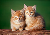 CAT 03 GR0181 01